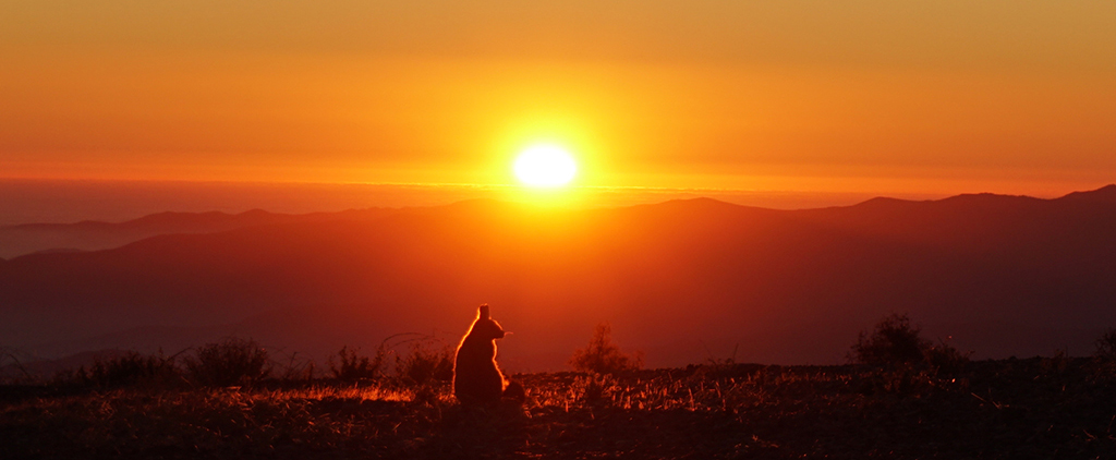 Silhouette of a viscacha at sunset at Las Campanas Observatory by Tom Connor